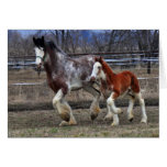 Mare & colt running greeting card