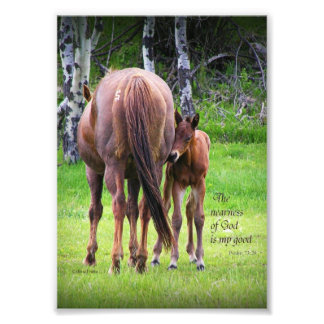 Mare With Colt - Nearness of God 5 x 7 print
