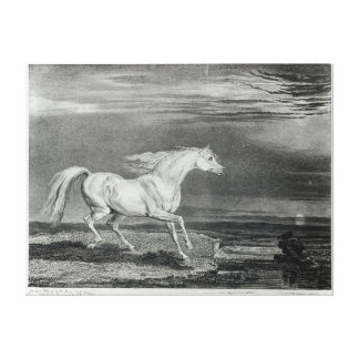 Marengo, engraved by the artist canvas print