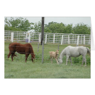 Mares and Foal Cards