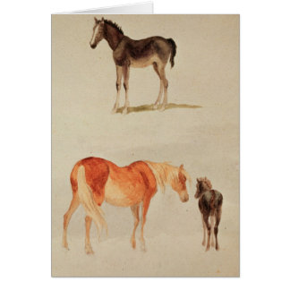 Mares and foals greeting cards