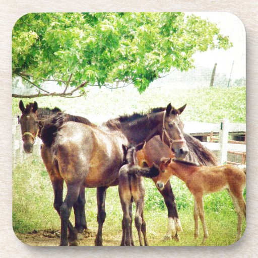 Mares and Foals Beverage Coaster