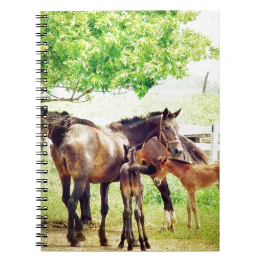 Mares and Foals Spiral Note Book