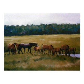 Mares and Foals Original Art Postcard