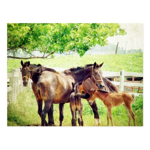 Mares and Foals Post Cards