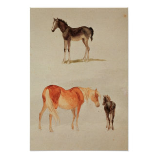 Mares and foals poster