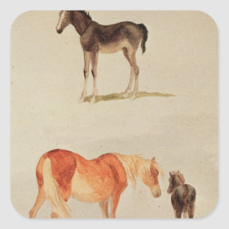 Mares and foals square sticker