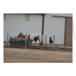Mares & Foals In Corral Stationery Note Card
