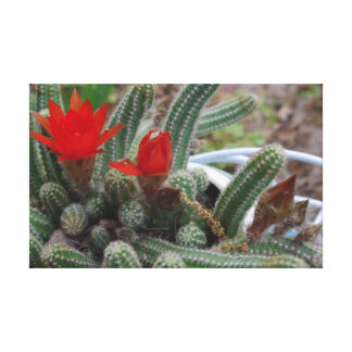 MARGIE'S CACTUS GALLERY WRAPPED CANVAS