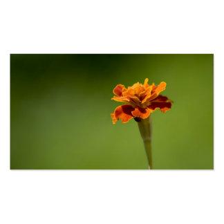 Marigold Flower Closeup Business Card Template