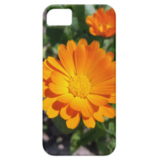 marigold flower iPhone 5 cases