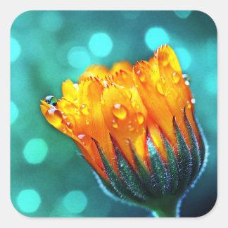 Marigold Flower on Teal Square Sticker