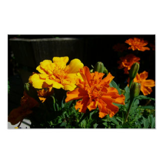 marigold morning glory poster