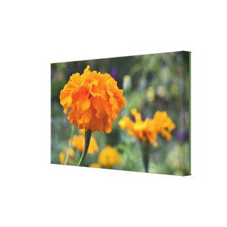 Marigold Orange Flower Nature Photography Garden Canvas Print