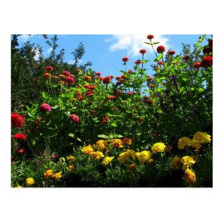 Marigolds, Zinnias and Blue Sky Postcard