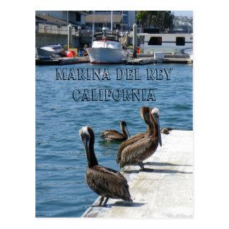 Marina Del Rey Belicans Postcard! Postcard