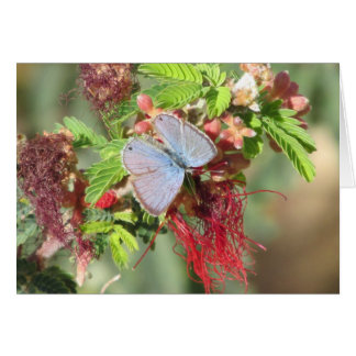 Marine Blue Butterfly Card
