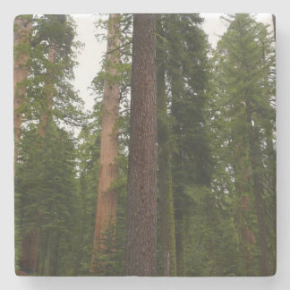 Mariposa Grove in Yosemite National Park Stone Beverage Coaster