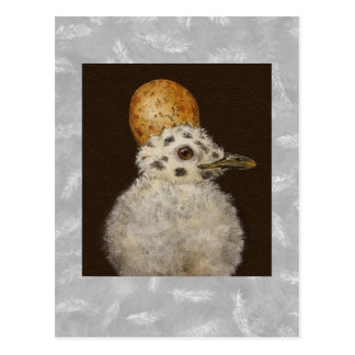 Marley the baby seagull postcard