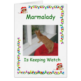 Marmalady Cat Rescue Christmas cards
