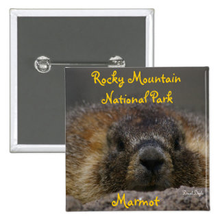 Marmot at Rocky Mountian National Park 15 Cm Square Badge