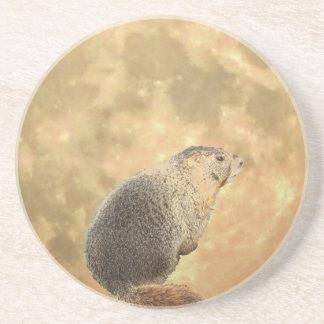 Marmot Moon Coasters