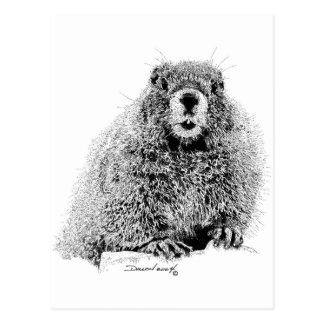Marmot Postcards