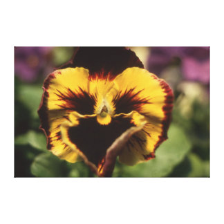 Maroon and Gold Pansy Canvas Print