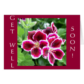 Maroon Beauty, GET WELL, SOON! Card