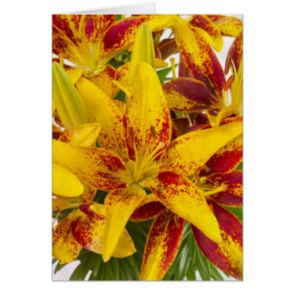 Maroon flecked yellow asiatic lily Blank Card