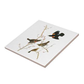 Marsh Blackbird John Audubon Birds of America Small Square Tile