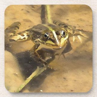 Marsh Frog Coaster