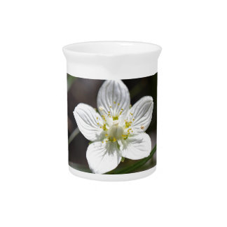 Marsh grass of Parnassus (Parnassia palustris) Beverage Pitcher