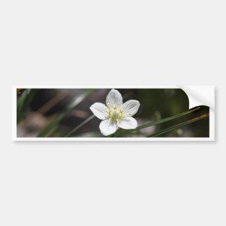 Marsh grass of Parnassus (Parnassia palustris) Bumper Sticker
