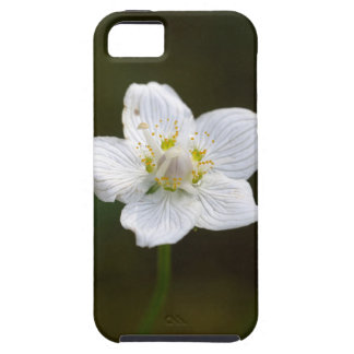Marsh grass of Parnassus (Parnassia palustris) Case For The iPhone 5