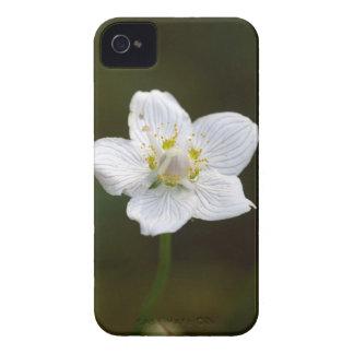 Marsh grass of Parnassus (Parnassia palustris) Case-Mate iPhone 4 Case