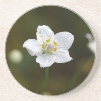 Marsh grass of Parnassus (Parnassia palustris) Coaster