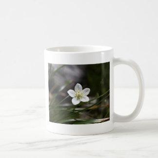 Marsh grass of Parnassus (Parnassia palustris) Coffee Mug