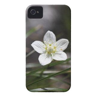 Marsh grass of Parnassus (Parnassia palustris) iPhone 4 Case