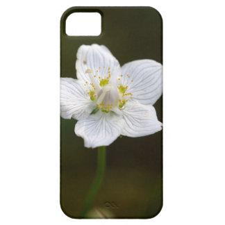 Marsh grass of Parnassus (Parnassia palustris) iPhone 5 Covers