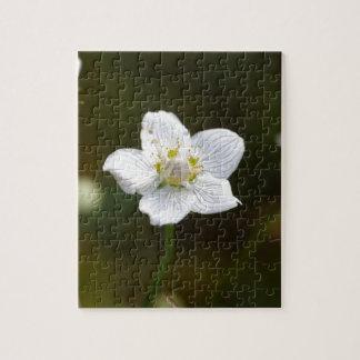Marsh grass of Parnassus (Parnassia palustris) Jigsaw Puzzle