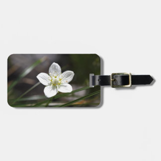 Marsh grass of Parnassus (Parnassia palustris) Luggage Tag