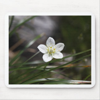 Marsh grass of Parnassus (Parnassia palustris) Mouse Pad