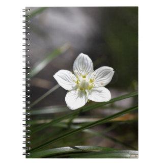 Marsh grass of Parnassus (Parnassia palustris) Notebook