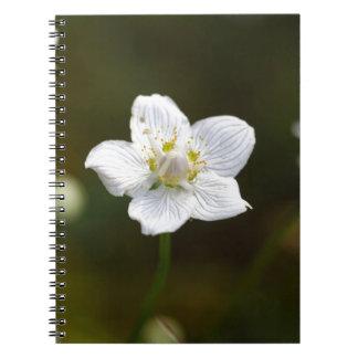 Marsh grass of Parnassus (Parnassia palustris) Notebooks