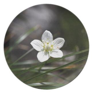 Marsh grass of Parnassus (Parnassia palustris) Plate