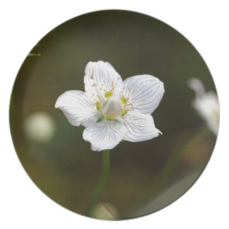 Marsh grass of Parnassus (Parnassia palustris) Plate