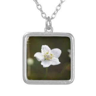 Marsh grass of Parnassus (Parnassia palustris) Silver Plated Necklace