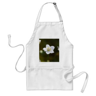 Marsh grass of Parnassus (Parnassia palustris) Standard Apron