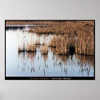Marsh Reeds Poster